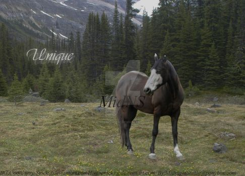 Unique by Horse-Lover1