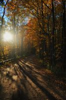 Fall Silhouettes by CodyWilliam