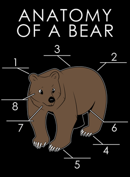 Anatomy of a Bear by artwork-tee