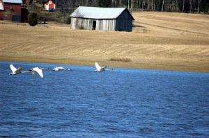 Flying Whoopers by Hannu-H