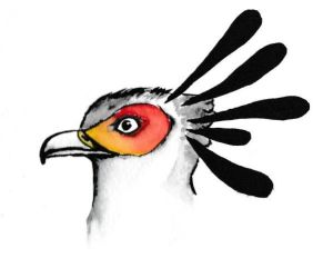 Secretary bird- watercolour pen by icedragon78970