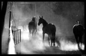 Horses by Nephand
