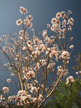 Flowers in the Sky I by Calcobrinus