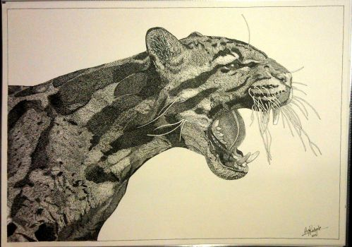 Clouded Leopard - Harry by PittuMcflurry