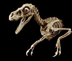 bambiraptor step8 by hannay1982