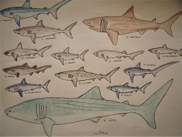 Happy week sharks and outdated Cretoxyrhina by RaptorGorilla