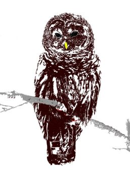 Owl for a T by marvah