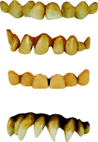 neanderthal teeth png kit by dbszabo1