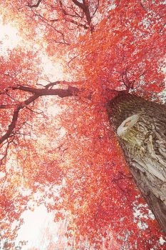 Burst of red by RobinHedberg