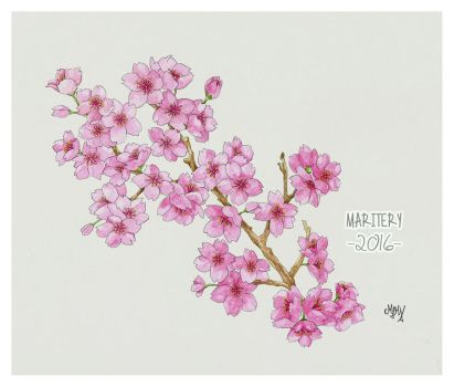 :: Cherry Blossoms (2) finished :: by maritery-san