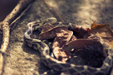 Sunning Snake by OneOfLifesMysteries