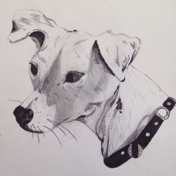White Jack Russel  by camilleroc