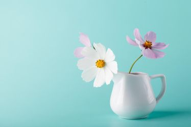 wallpaper with cosmos flowers by AndreyCherkasov