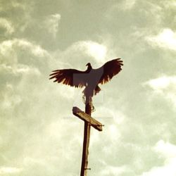 Perched On The Cross by SimplyLoveless