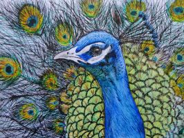 Ink Peacock Doodle by Catherine1992