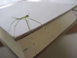Stick Insect 7 by aru0