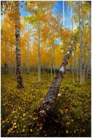 Autumn Forest by michael-dalberti