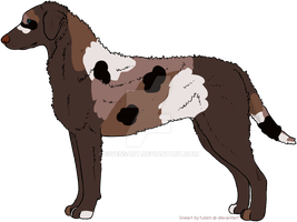 Usd Adopt - Curly Coated Retriever by SivensArt
