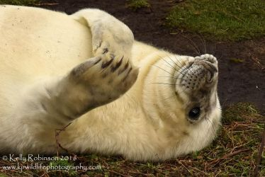 Seal Pup Wave by Shadow-and-Flame-86