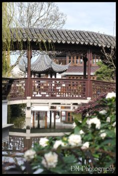 Portland Chinese Gardens XIV by davidmoakes