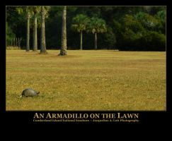 An Armadillo on the Lawn by Isquiesque