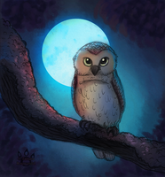 Night Owl by tamaraR