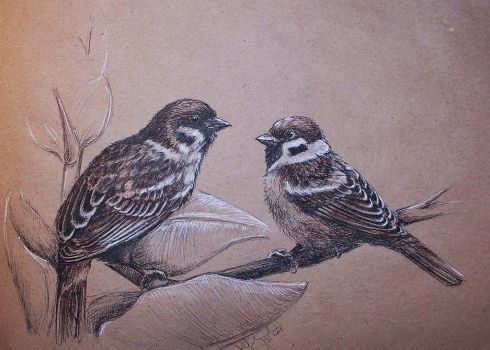 Eurasian tree sparrows by Concini