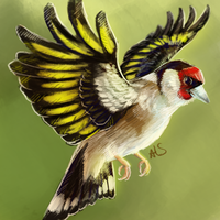 european goldfinch [with video in desc] by r-20