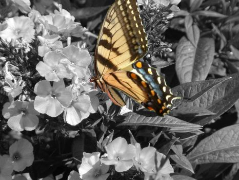 The Colour of Butterfly by BenXT
