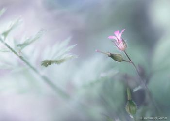 Sweetness of a spring's flower by Yeoman2b