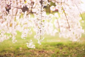 Weeping Cherry Tree - Day 244 by escaped-emotions