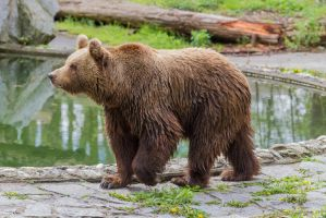 Bear by Fotostyle-Schindler