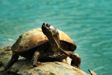 Happy Turtle by MoreThanNothing