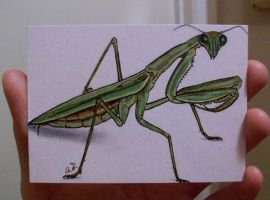 Praying Mantis in copic marker by TinyAna