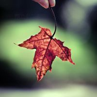 Fall. by TinaApple