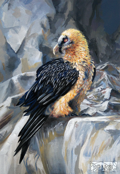 Bearded Vulture by Denouu