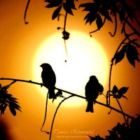 Early birds by TammyPhotography