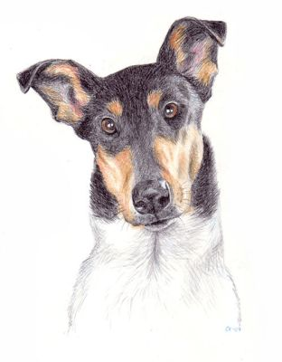 smooth collie portrait by asbolos