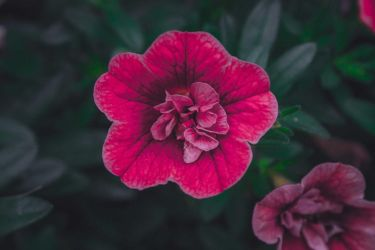 Flower by guga07