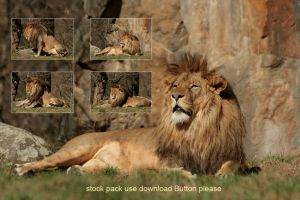 Lion stock pack by Drezdany-stocks