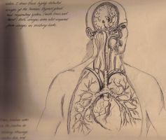 Human Respiratory System by Silvercresent11
