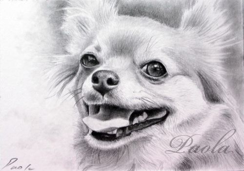 Chihuahua 3 ACEO by skippypoof