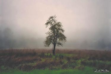 Pear In A Fog by CanYouSeeTheRealMe