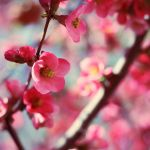 blossom by ThisFairyTale