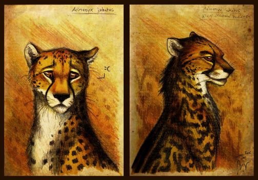 Cheetah by Culpeo-Fox