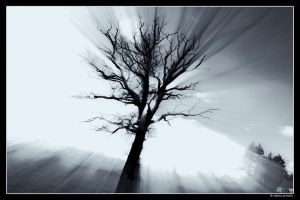 Ghost tree by dc58