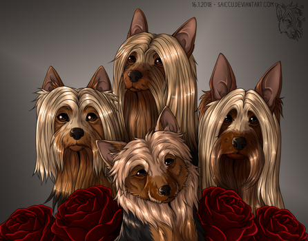 Four silky terriers by Saiccu