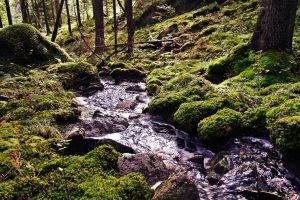 Forest river by The-girl-in-Mirkwood