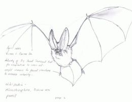 bat sketch by victoroil