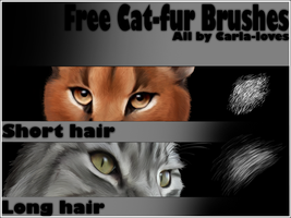 Brush Fur Long by Carla-loves